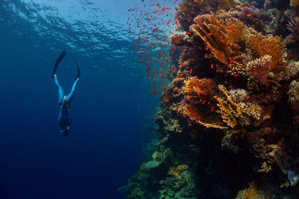 Apnée en plongée : comment faire pour progresser ?