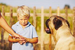 Comment surmonter sa peur des chiens ?