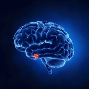 Insuffisance hypophysaire: comment stimuler l'hypophyse?